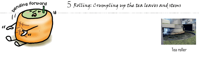 5. Rolling: Crumpling up the tea leaves and stems
